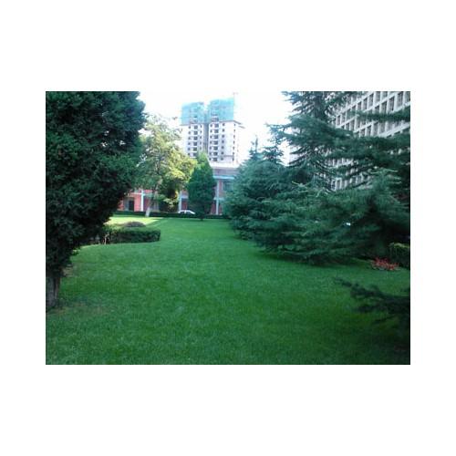 甘肃有实力的甘肃园林绿化公司-西北园林绿化苗木销售苗圃