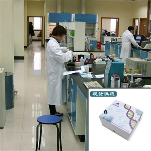 睾酮(T)ELISA试剂盒